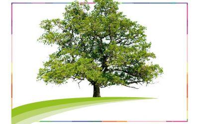 Der OC-Baum