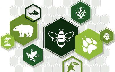 Forum für Nachhaltigkeit – Biodiversity