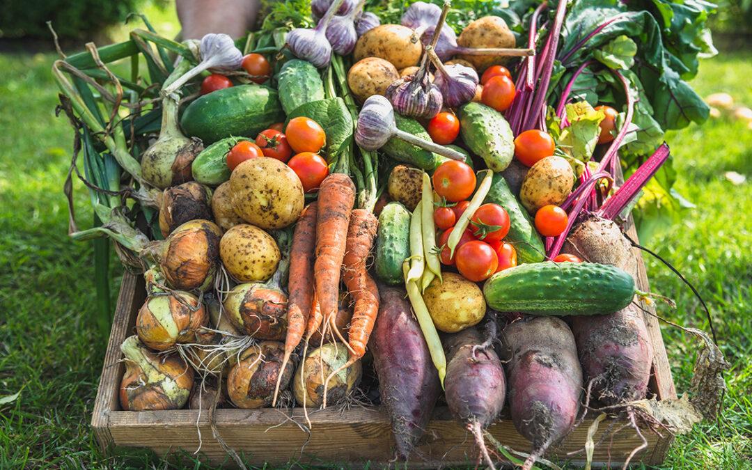 Der Frühling ist da – wir haben nach dem Prinzip der dynamischen Agroforstwirtschaft ein Beet bepflanzt
