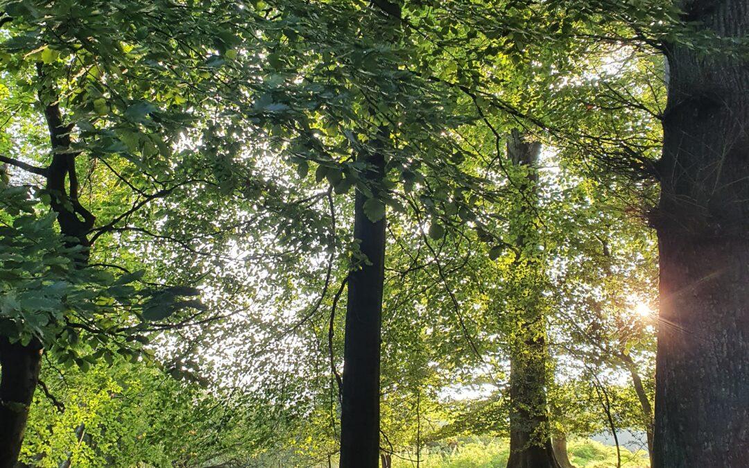 Alt wie ein Baum, möchte ich werden…